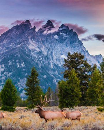 elk hunting season in colorado