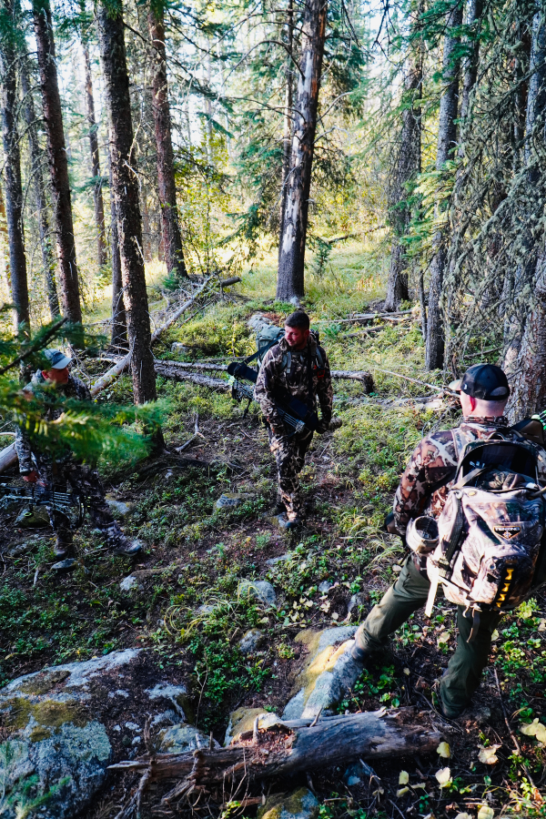 Tips for Hunting Elk on Public Land in Colorado